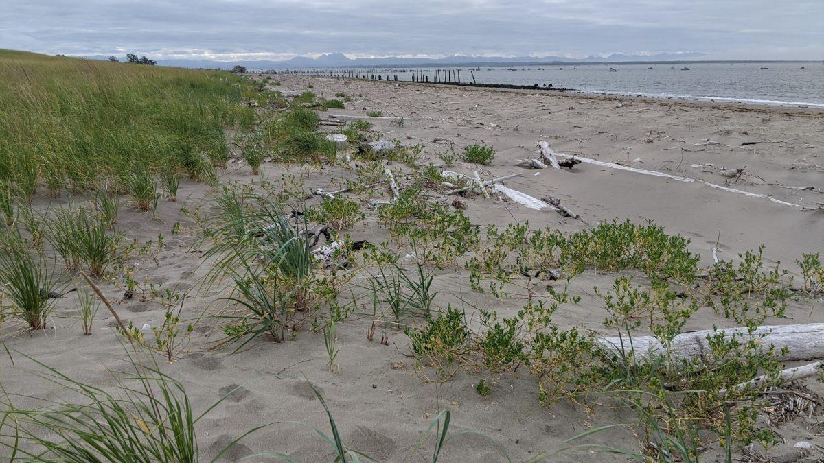 Baker Bay Wet Sand Island